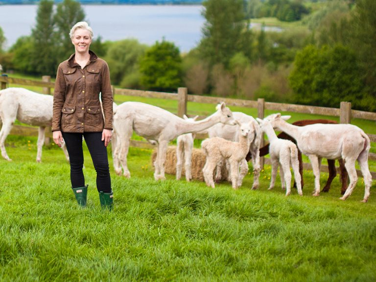 kerry lord and alpacas