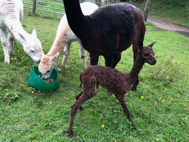 Nidian new born